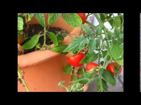 Come spellare un pomodoro fresco senza romperlo! - LEITV