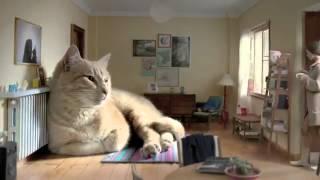 Кот о котором мечтает каждый^^