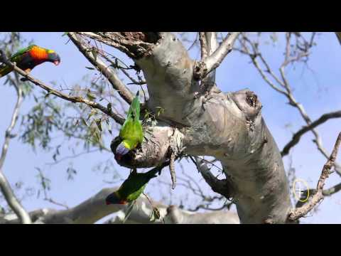 Some Of Australia's Stunning Parrots In UHD