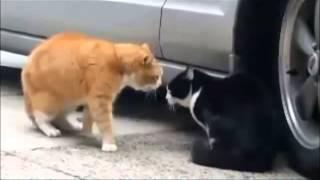 Ржачные Приколы с Кошками и Котами! Умора.