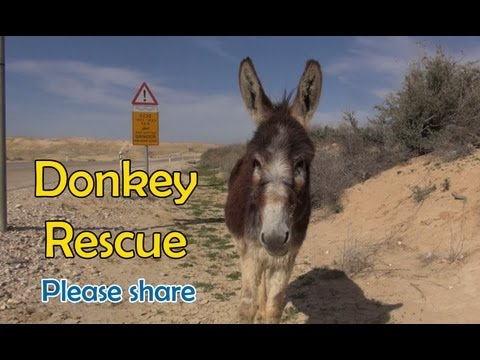 Donkey Rescue in Israel - If you liked the video, please share it.