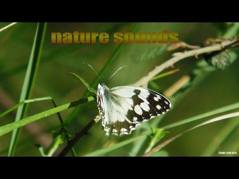 nature-sounds-and-butterflies--naturaleza-sonidos-y-mariposas--