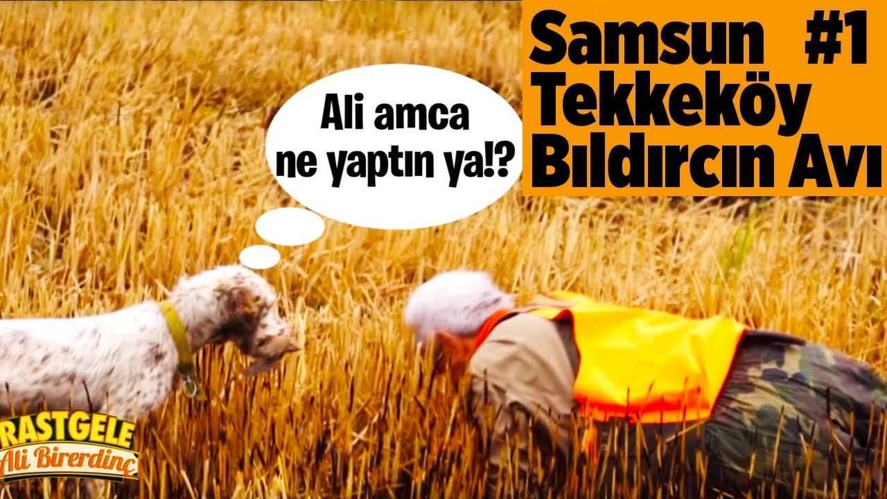 Samsun Tekkeköy Bıldırcın Avı 1.Bölüm Rastgele Ali Birerdinç Yaban Tv
