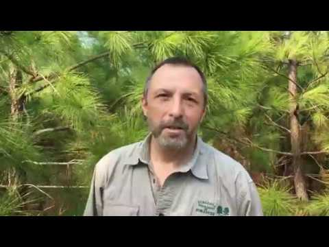 What is Forest Research?