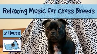 Over 8 Hours of Relax My Dog Music! Long Playlist of Music Perfect for Cross Breeds! Mix Breed Dogs