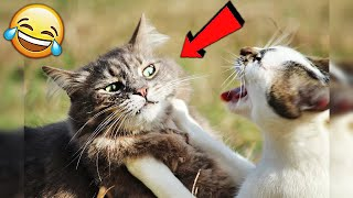 СМЕШНЫЕ ЖИВОТНЫЕ 2020 / ПРИКОЛЫ КОТЫ СОБАКИ, ЛУЧШИЕ ПРИКОЛЫ с Кошками и Собаками Funny Cats