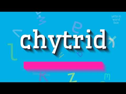 "How to say ""chytrid""! (High Quality Voices)"