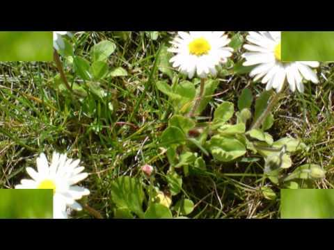(HD 720p) Four Seasons (First Movement, Spring), Antonio Vivaldi