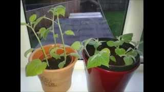 Garden Allotment (Ep 8) - November/December (2014)