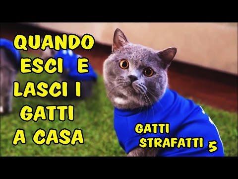 QUANDO LASCI I GATTI A CASA ... gatti strafatti 5
