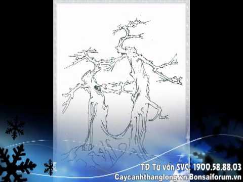 Bonsai cây thế xưa (Caycanhthanglong.vn)