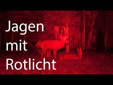 suche nach dem besten Ausverkauf Bestbewertet echt Jagen mit Rotlicht - das nächste Level der Nachtjagd