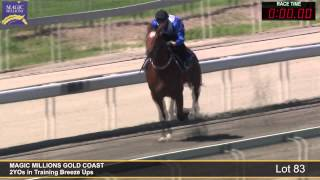 Lot 83 - 2YOs in Training Breezeup Thumbnail