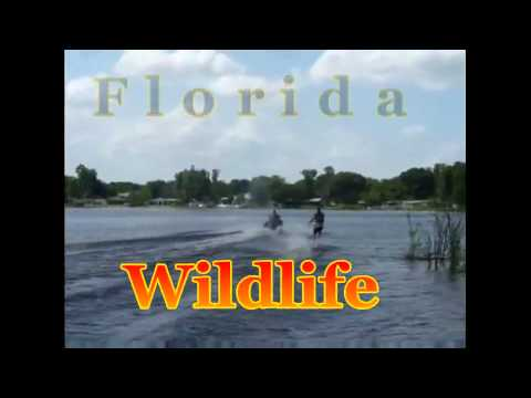 Florida Wildlife Title final edit