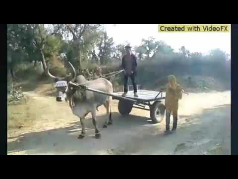 Char Char dangdi vadi mal gadi
