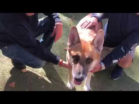 Dog & Joe Sho - #FURSDAY - BOGART