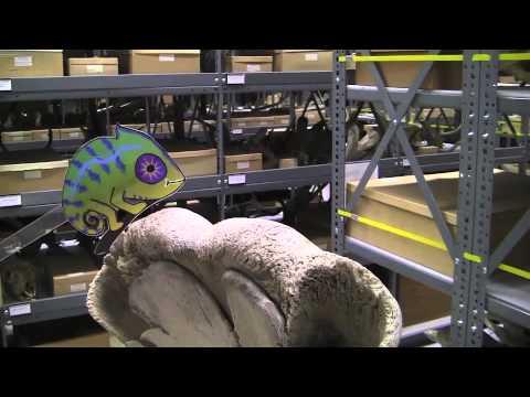 Curious Cam Visits UC Berkeley's Museum of Vertebrate Zoology