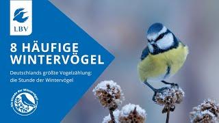 8 Vögel Im Winter: Amsel, Spatz, Feldsperling, Rotkehlchen, Kohlmeise, Blaumeise, Buchfink, Grünfink