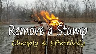 How to Remove a Stump, Cheaply & Effectively!