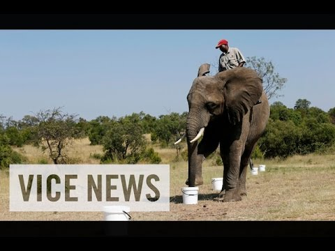 Bomb-Sniffing Elephants in South Africa: VICE News Capsule, February 27