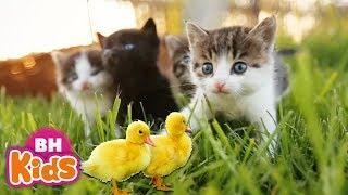 Bài Hát Thiếu Nhi Con Vât Cho Bé ?Ai Cũng Yêu Chú Mèo ? Thật Là Hay | Nhạc Thiếu Nhi