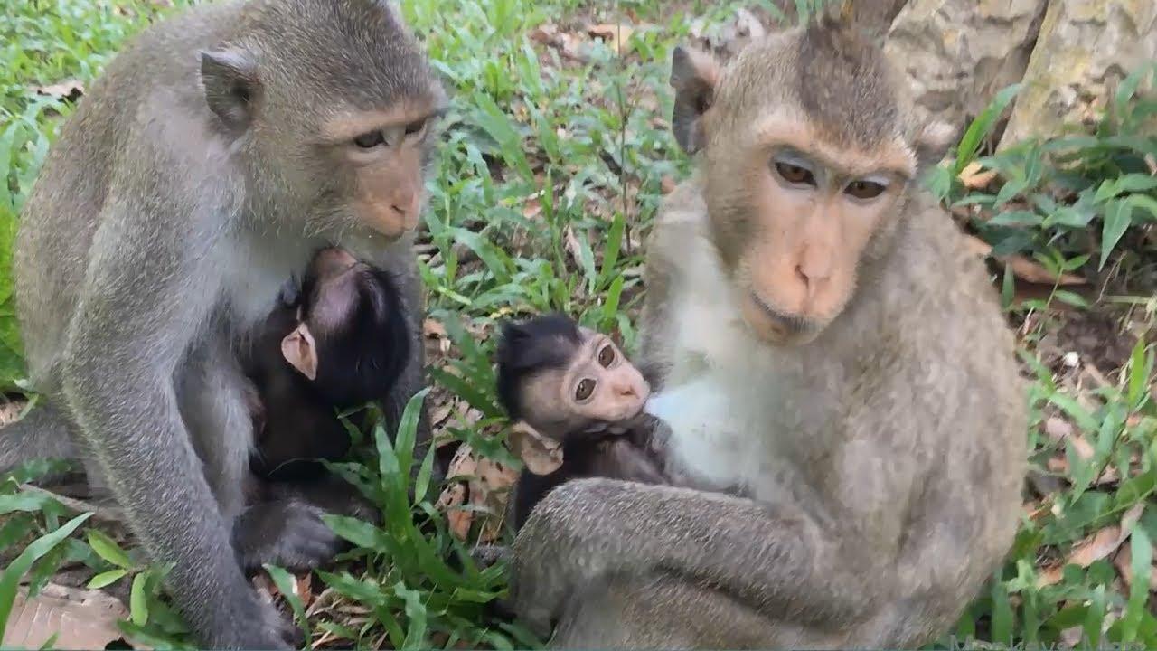 Two Cute Baby Monkeys Daily Monkeys Man #302 - YouTube
