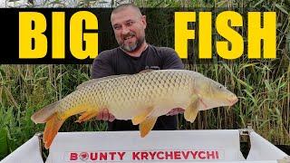 Ловля БОЛЬШОЙ РЫБЫ рыбалка на карпа прикормка на BIG FISH