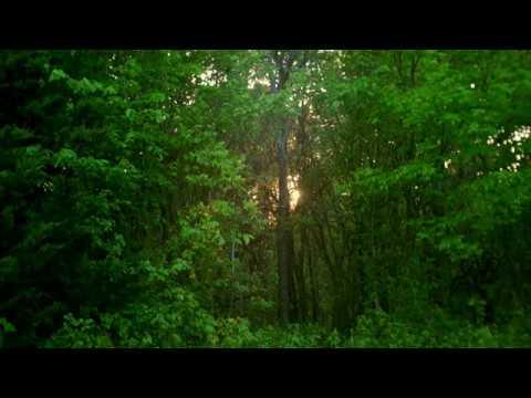 Setting Sun Through Trees | FREE NATURE STOCK FOOTAGE