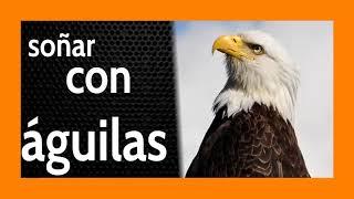 Soñar con Águila 🦅 De Lo Mejor que te Puede Pasar 🔥