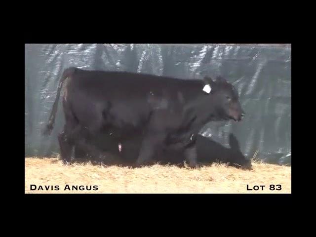 Davis Angus Lot 83
