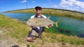 Ultra Clear DITCH Fishing In MIAMI! MASSIVE Canal Jack Crevalle