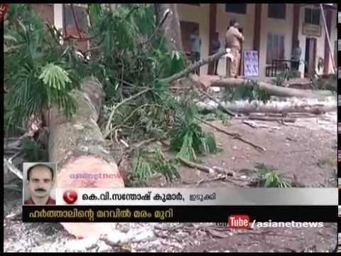 Shade Trees are cutting down during hartal at Kattappana