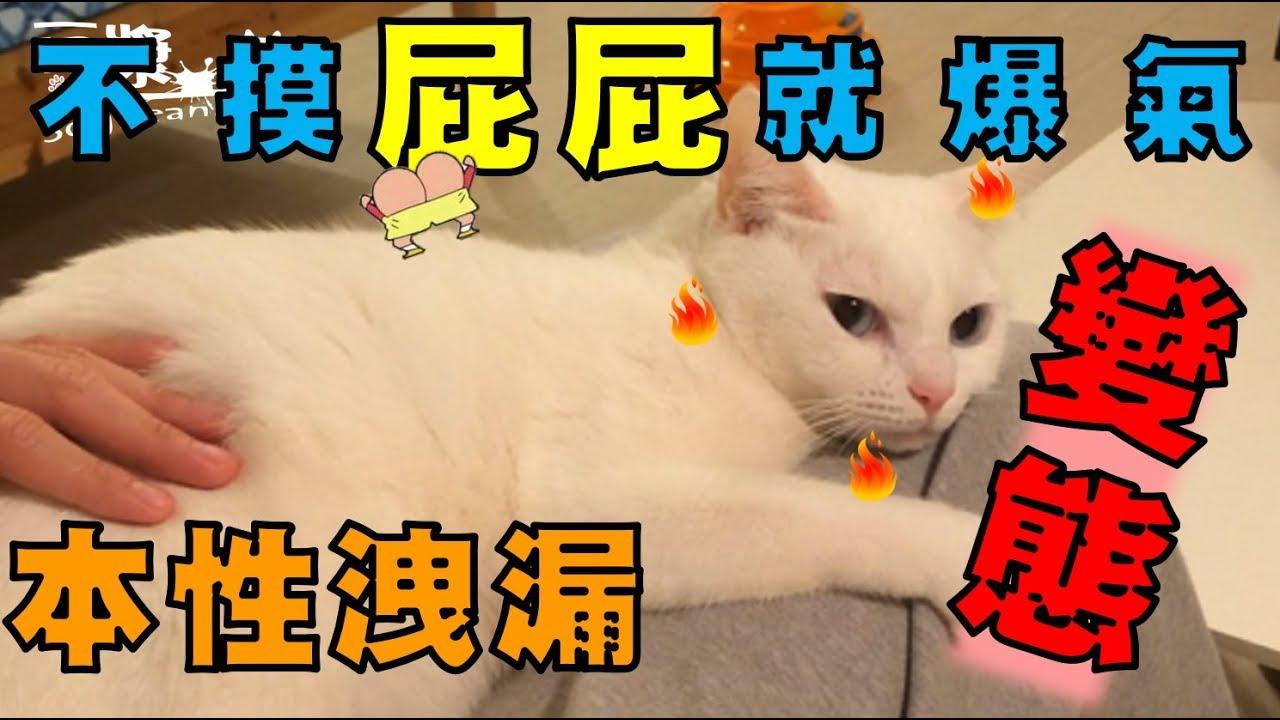 【豆漿 - SoybeanMilk】貓界女神好變態 強迫別人摸她屁股!? - YouTube
