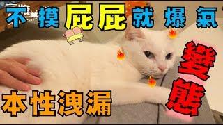 【豆漿 - SoybeanMilk】貓界女神好變態 強迫別人摸她屁股!?