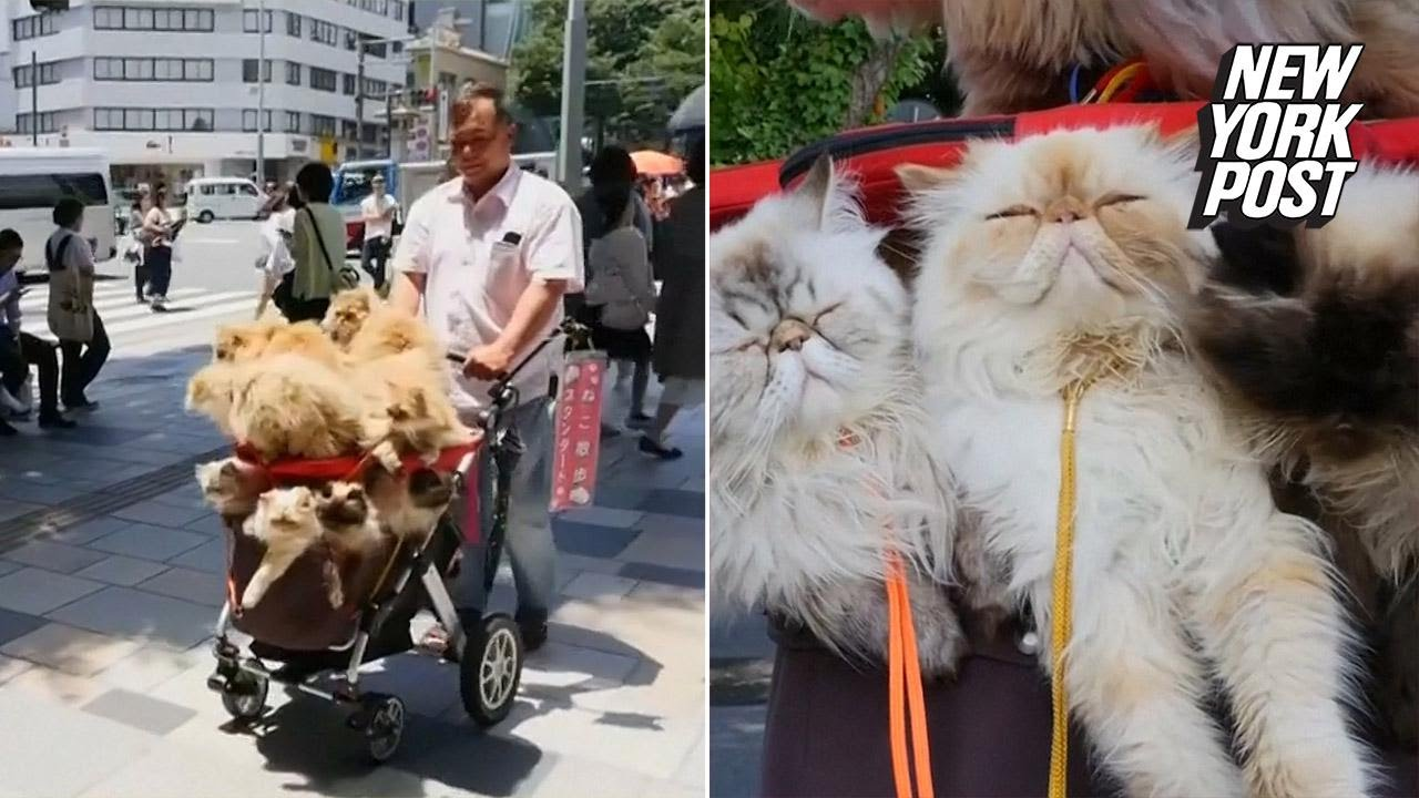 Japanese Retiree Takes  Cats On Annual Road Trip New York Post