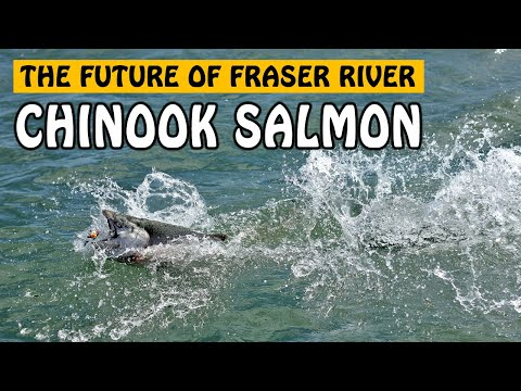 THE STATE OF FRASER RIVER SALMON FISHERIES - A Conversation With Dr Eric Taylor | Fishing With Rod