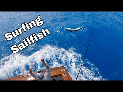 SURFING SAILFISH! Epic SIGHT FISHING With 18 Releases