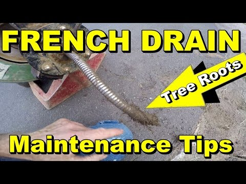 French Drain - Get the Roots Out - Cleaning Tips