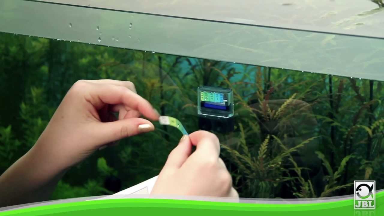 jbl s permanent co2 aquarium test youtube