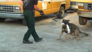 Multi-agency K-9 Training