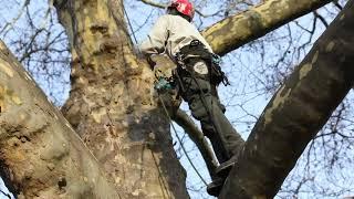 Video - Arbor Day 2020