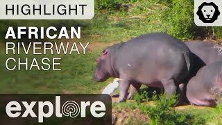 African Riverway Chase - Live Cam Highlight