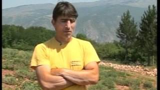 Prica o prvoj velikoj plantazi lavande u Srbiji