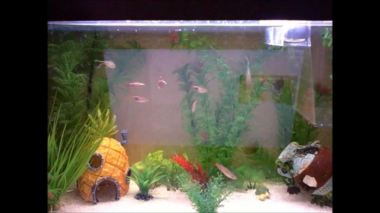 El mejor acuario del mundo youtube - El mejor colchon del mundo ...