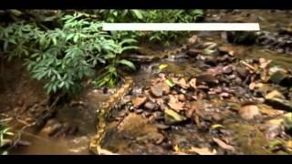 Dokumentation - Riesen Schlangen - Boas - Anakondas