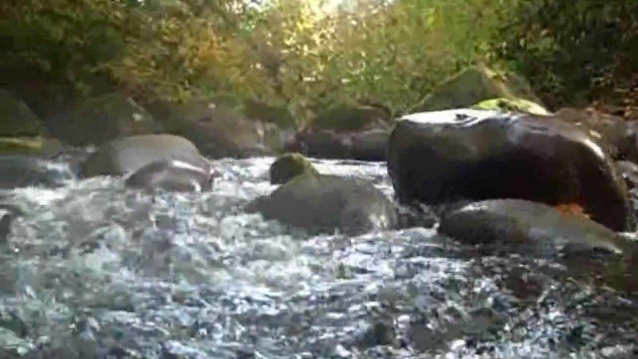Sandy river coho 2009 youtube for Sandy river fishing report