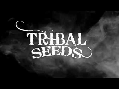 New Music! Tribal Seeds - Gunsmoke (Demo)