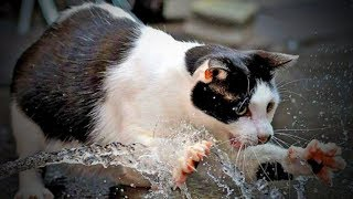 Crazy Cats 😹😹 Funny Cats Love To Play Water (Part 1) [Funny Pets]