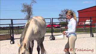 Clicker Training For Horses
