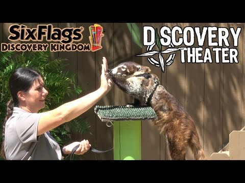 (4K) Wildlife Experience Show at Discovery Theater [FULL Animal Show] (Six Flags Discovery Kingdom)